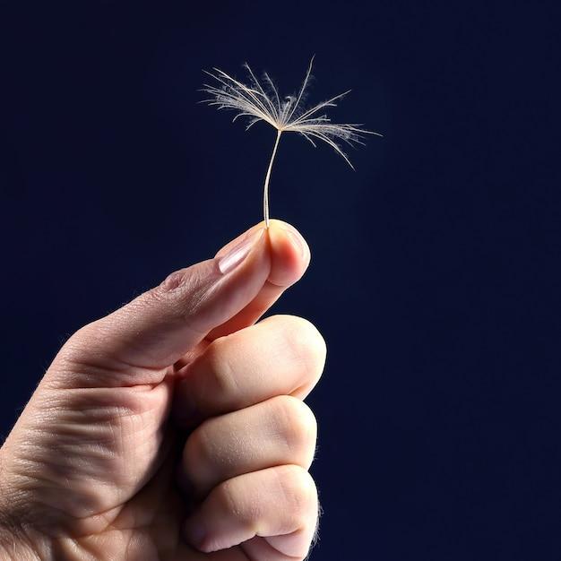 A mão com a semente de um dente de leão em um fundo escuro. começo de vida