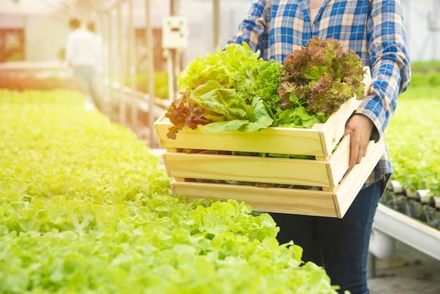 A mão da cesta asiática da posse do jardineiro do fazendeiro da mulher mostra a alface verde fresca e o vegetal orgânico hidropônico do osk vermelho.