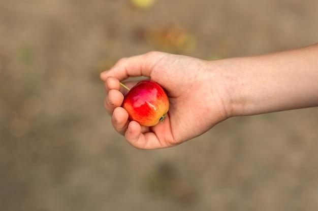 A mão da criança segura uma pequena maçã na palma da sua mão.