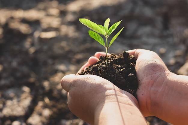 A mão da menina estava plantando as mudas no solo seco.
