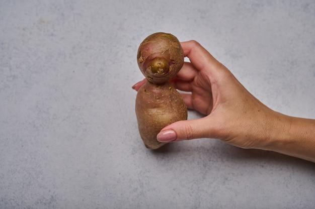 A mão da mulher segura uma batata feia na forma de uma pessoa ou animal em um fundo cinza engraçado anormal