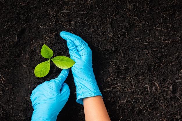 A mão da pesquisadora usa luvas de borracha segurando uma árvore em crescimento e cultivando o
