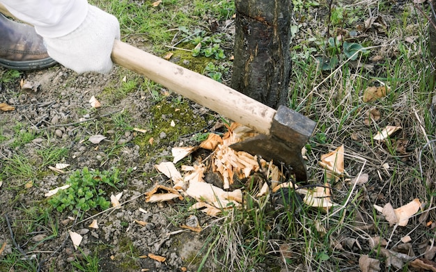 A mão de um homem com um machado, primavera cortando árvores doentes do jardim.