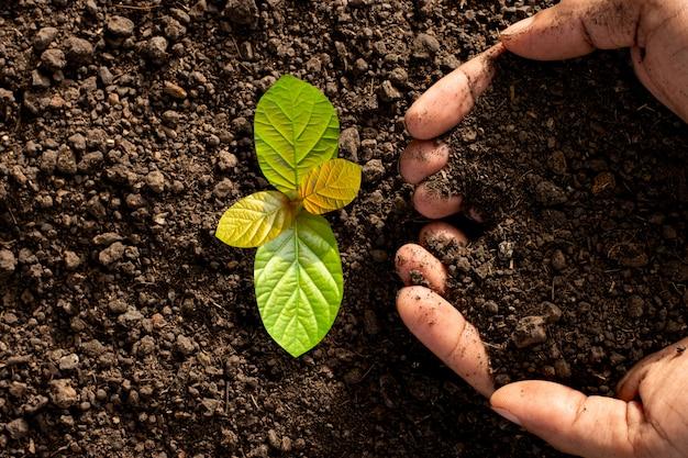 A mão de um homem está plantando mudas no solo.