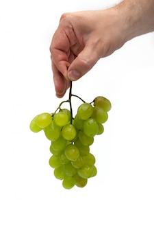 A mão de um homem segura um ramo de uvas verdes com gotas de água verticalmente sobre um fundo branco