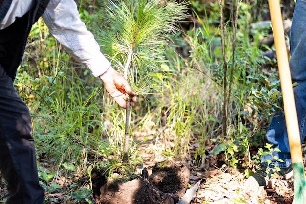 A mão de um velho segurando uma pequena árvore para plantá-la em um buraco no chão no meio da floresta em um dia ensolarado