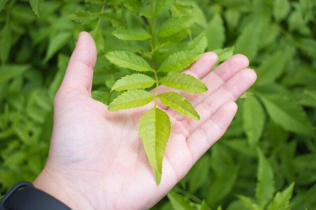 A mão de uma mulher está segurando as folhas verdes