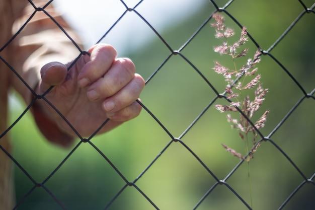 A mão de uma mulher idosa segura a malha de uma cerca de ferro. o velho está trancado e não pode sair. as medidas de quarentena proíbem sair de casa. um broto cresce à direita.