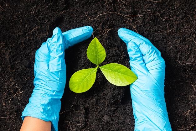 A mão de uma mulher pesquisadora usa luvas de borracha segurando uma árvore que cresce e alimenta em solo fértil preto