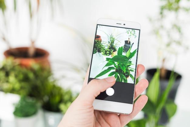 A mão de uma pessoa tirando foto da planta em vaso com smartphone