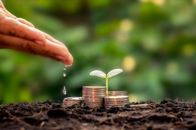 A mão do empresário está regando as plantas que crescem na pilha de moedas empilhadas sobre o crescimento financeiro e as idéias de gestão de negócios.
