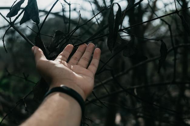 A mão do homem em galhos de árvores e folhas