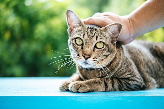 A mão é esfregada na cabeça do gato em um piso de cimento azul