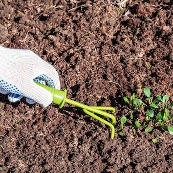 A mão na luva solta o solo com uma ferramenta especial enxada