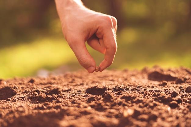 A mão suja do agricultor coloca uma semente da planta no buraco no solo