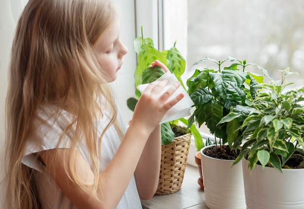 A menina limpa a folhagem das plantas da casa, cuidados com a planta da casa