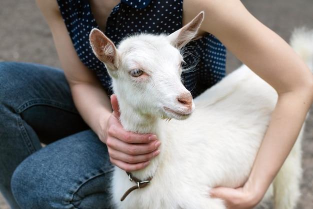 A menina pomba uma cabra branca pequena, uma menina com uma cabra