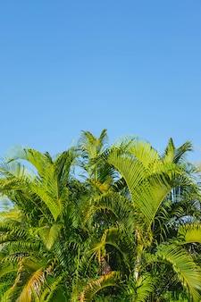 A mesa sai de palmeiras e o céu conceito de verão