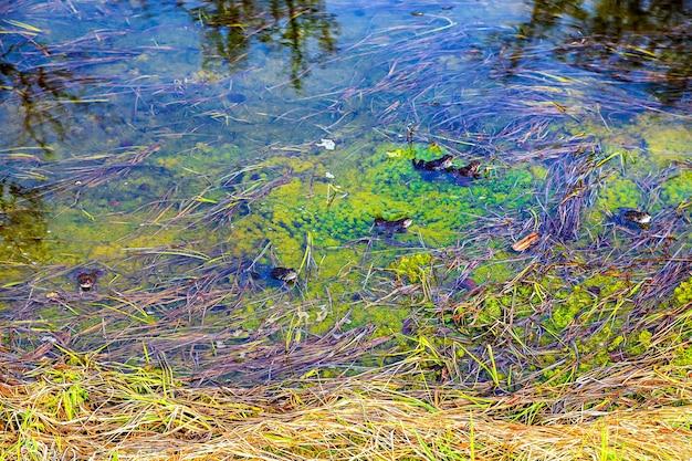 A mistura de cores de algas verdes e grama amarela debaixo d'água