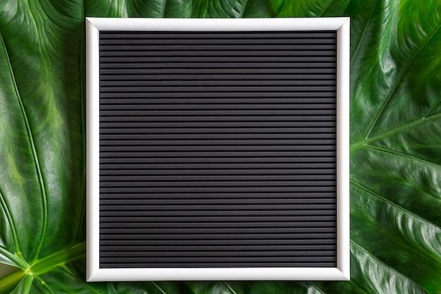 A mistura tropical verde deixa o fundo com um quadro preto em branco, vista superior