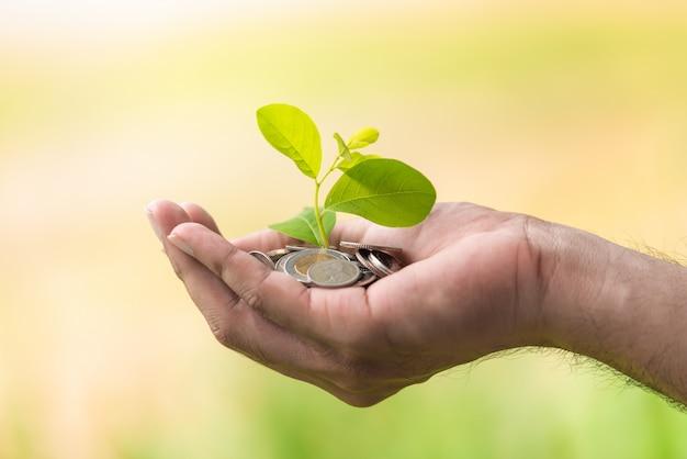 A moedas com árvore nas mãos de pessoas em poupança e crescente conceito de dinheiro