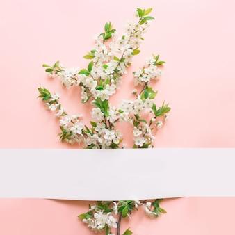 A mola floral com a flor branca da ameixa floresce na cor-de-rosa.