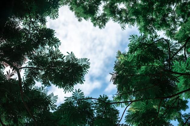 A moldura de folhas verdes é feita pela natureza