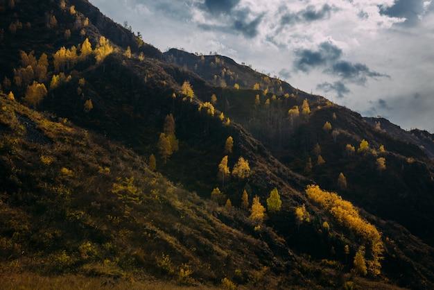 A montanha rochosa coberta de árvores amarelas contra o céu nublado do outono é iluminada pelos raios do sol poente. paisagem de outono majestoso, close-up.