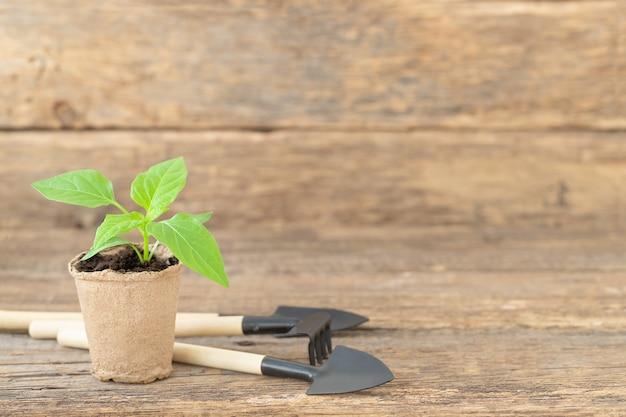 A muda verde pequena na panela e acessórios para jardinagem na mesa de madeira