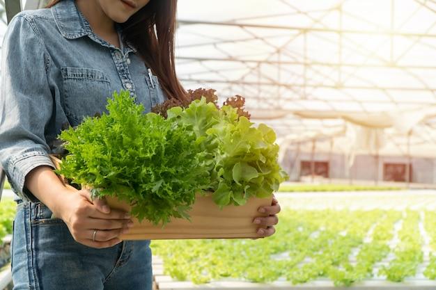 A mulher asiática do fazendeiro que guarda a caixa de madeira encheu-se com os vegetais de salada no sistema de exploração agrícola hidropônico na estufa.