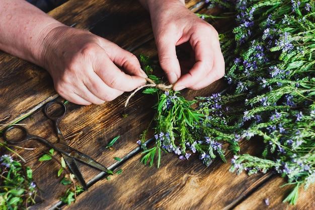 A mulher colhe ervas no inverno para o chá, secando plantas úteis.