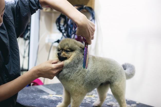 A mulher está cortando o cabelo um cão