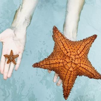 A mulher segura em suas mãos pequena e grande estrela do mar