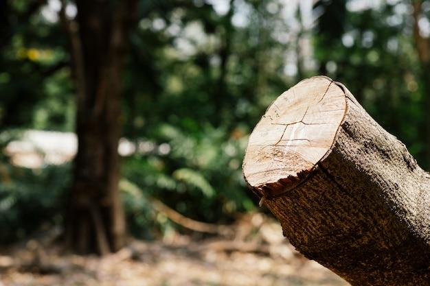A natureza do corte da árvore é destruída