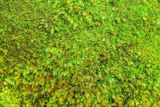 A natureza verde musgo