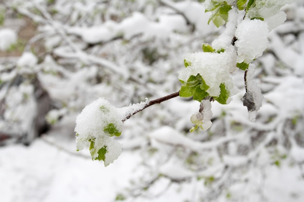 A neve caiu drasticamente na primavera.
