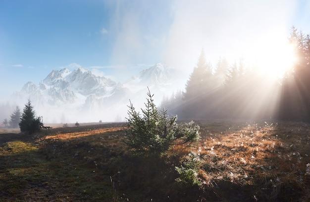 A névoa da manhã rasteja com restos sobre a floresta de montanha de outono coberta de folhas de ouro. picos nevados de montanhas majestosas ao fundo