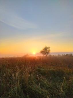 A névoa da manhã se espalha em um prado com grama alta e o nascer do sol