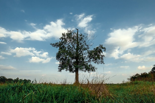 A paisagem bonita com árvore solitária está em um campo verde.