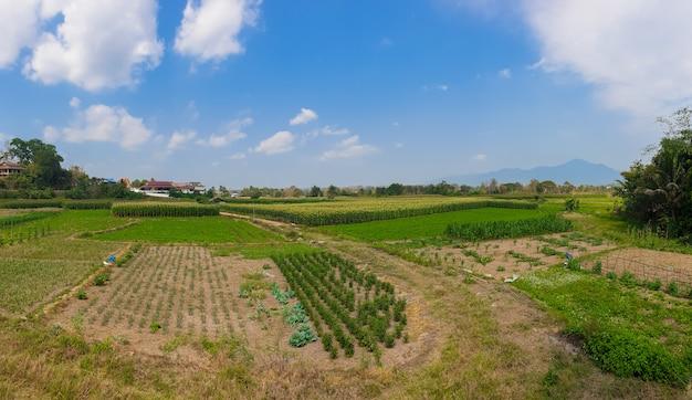 A paisagem com exploração agrícola e o céu azul na província de nan, ao norte de tailândia.