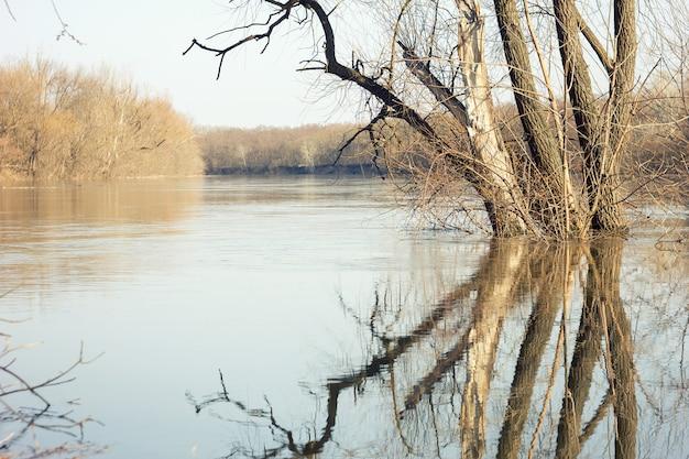 A paisagem da mola com árvores de vidoeiro e derrete a água no lago ou no rio.