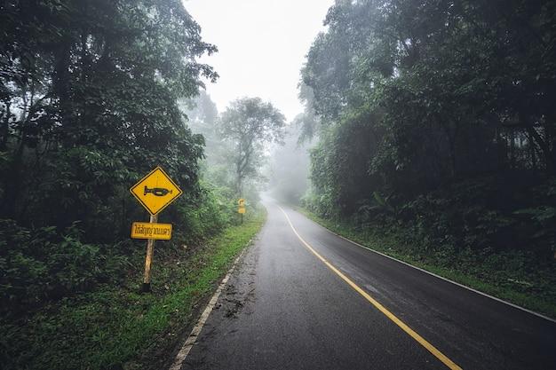 A paisagem da névoa densa nas estradas e na estrada assina dentro a floresta no inverno.