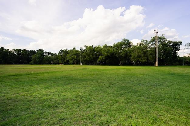 A paisagem do campo de grama e o parque público do ambiente verde usam como fundo natural,