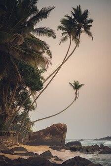 A paisagem praia no oceano bela paisagem oceano e palmeiras