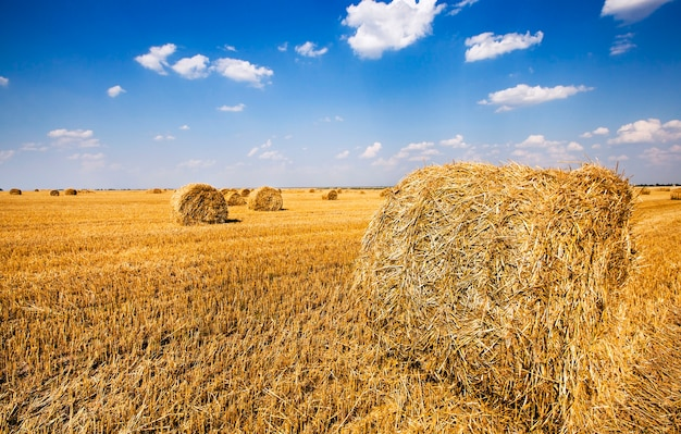 A palha empilhada após a colheita dos cereais