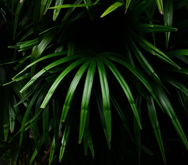 A palma verde deixa testes padrões na luz da floresta tropical e no fundo da sombra