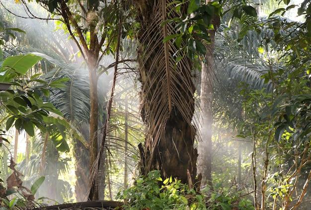 A palmeira com fundo de luz solar natural de manhã