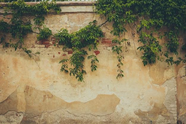 A parede coberta por folhas verdes