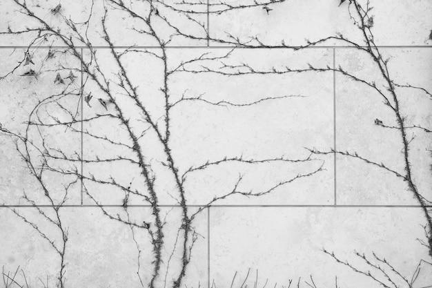 A parede é feita de tijolo e depois pintada de branco. existem trepadeiras na parede esquerda. esta parede é popular