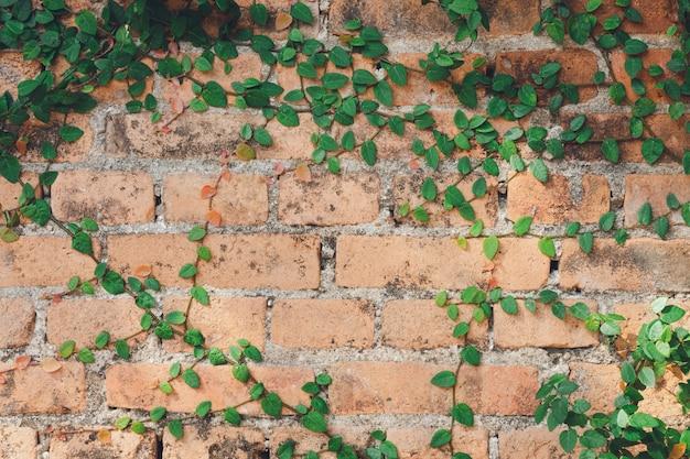 A parede é feita de tijolos e depois pintada de branco.